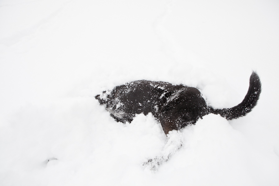 dog-in-snow